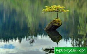 Синдром деперсонализации 2 (дерево в воде)